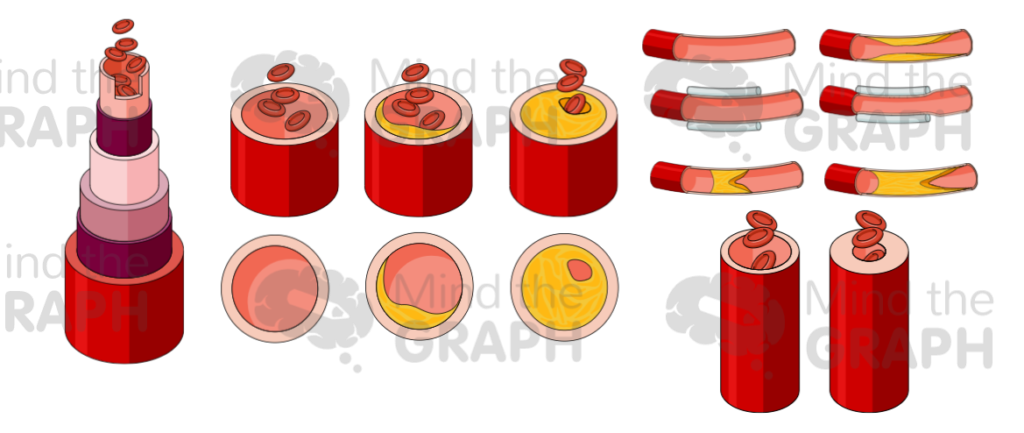 artery_scientifc_illustrations