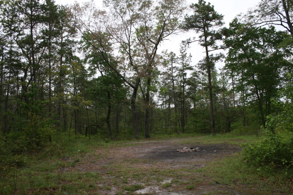 Clearing among trees, dark circular patch of soil