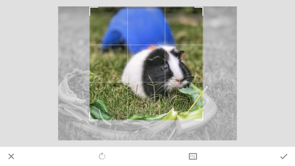 Rule of Thirds - smartphone photography training - how to crop a square photo