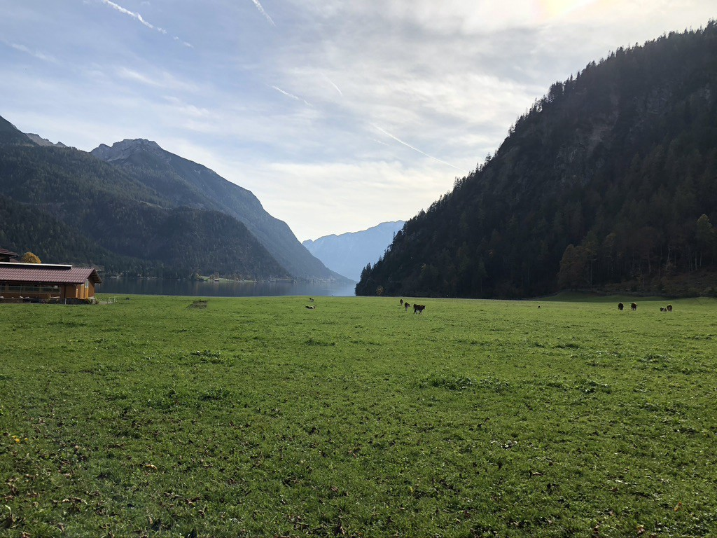 Image of plains with few cows with in the distance a lake, surrounded by tree-covered mountains in Austria.