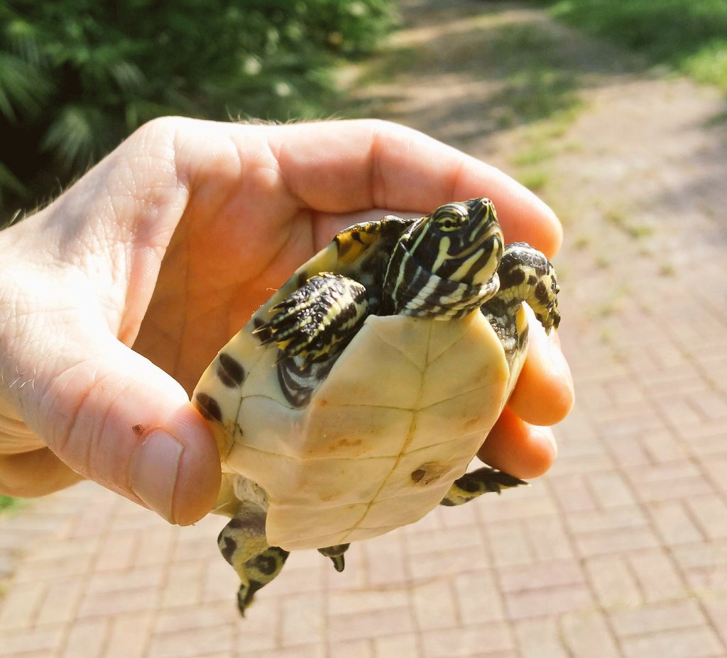 The Life Lessons I Learned From My Pet Turtle By Joe Duncan Pollinate Magazine Medium