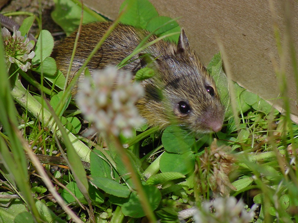 mouse sitting next to wall in grass