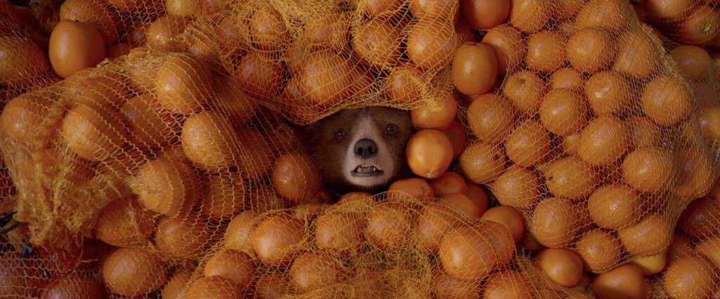 Paddington surrounded by oranges.