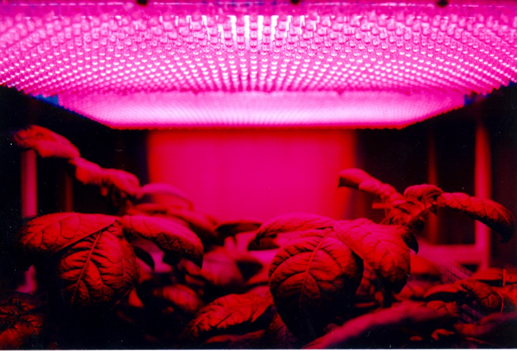 The Ultimate Lighting Guide For Cans Cultivation