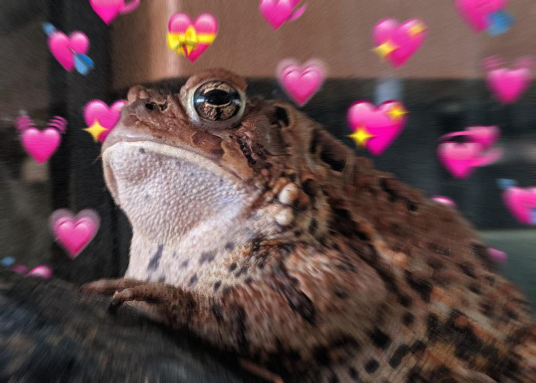 cute toad leaning against a rock with pink heart emojis around her