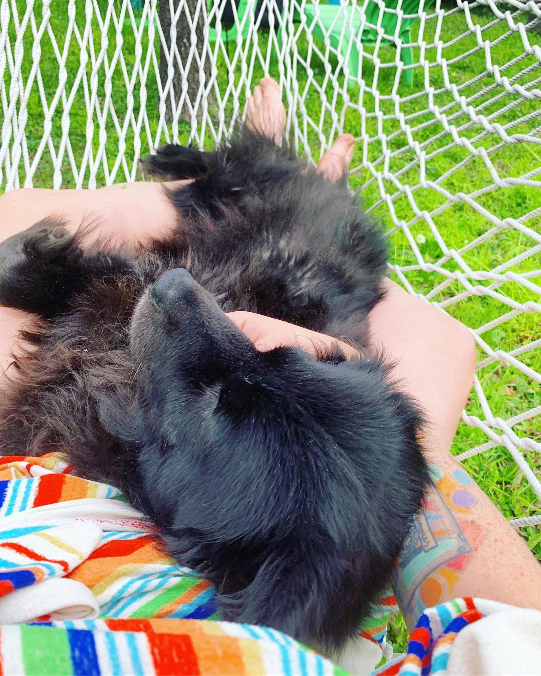 A black dog reclining in the author's lap in a hammock above bright green grass