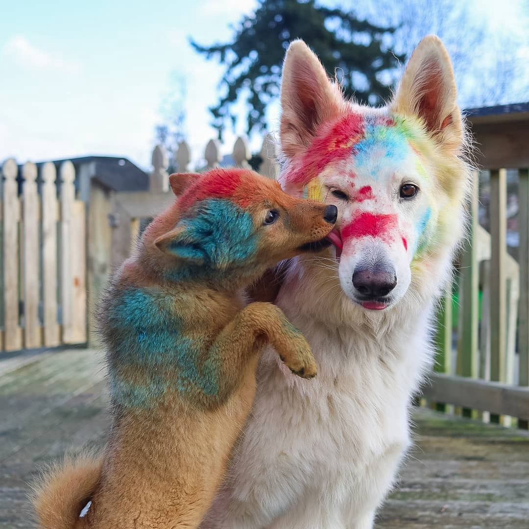 Tofu and Kaya pose with paint.