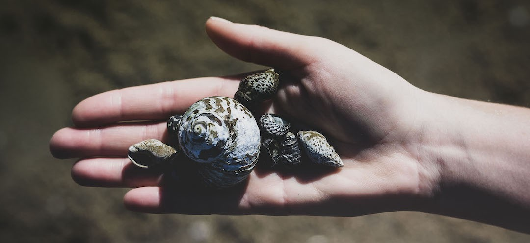 Hand holding various shells
