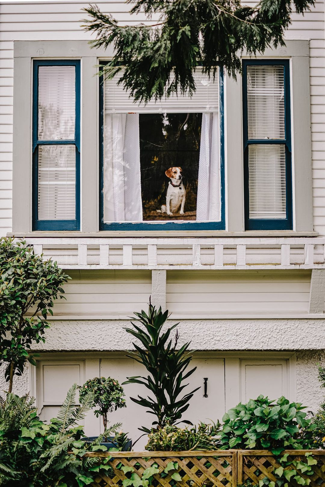 Dog sitting in the window of a white house.
