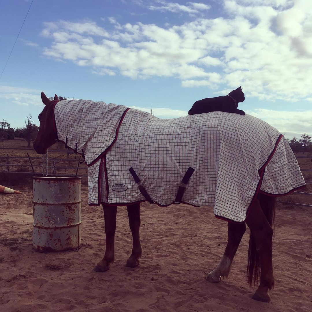 Champy wearing a blanket with a grid pattern on it, Morris lounging on his back, as he stands in front of a rusted barrel.