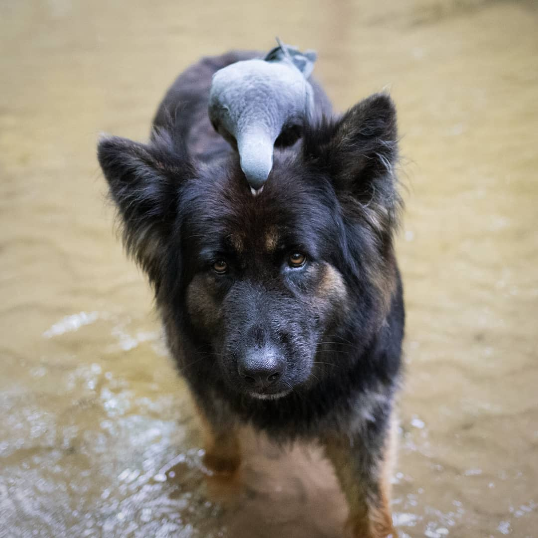 A pigeon goes for a ride on Vendetta's head.