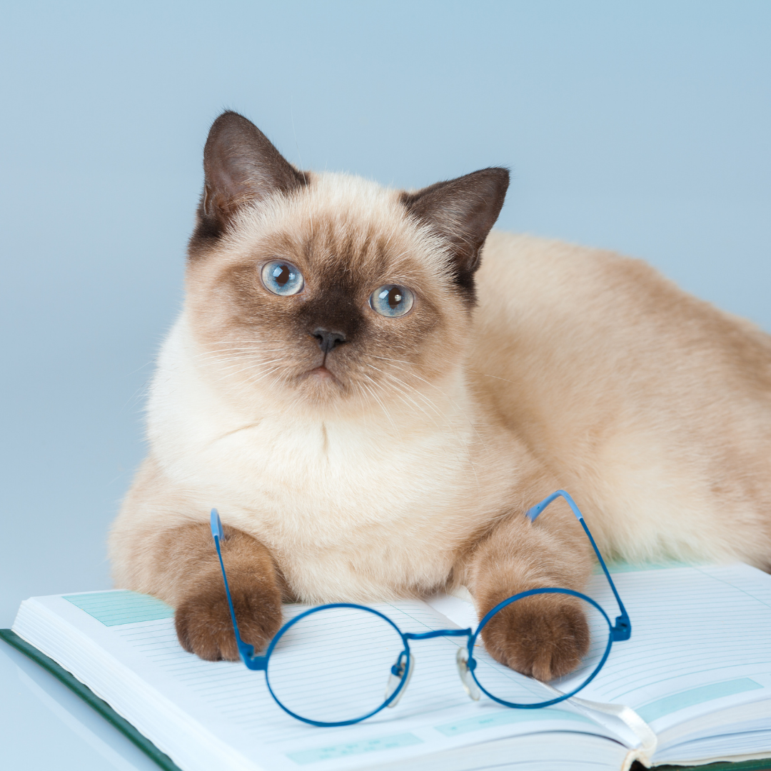 Cat with glasses and a book