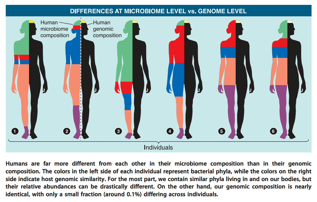 Humans differ from each other far more in terms of microbiome composition than genomic compostion.