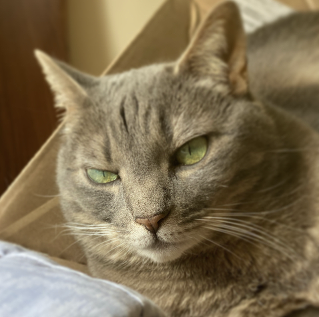 A close-up on the face and ears of a grey cat with green eyes sitting atop a cardboard box.