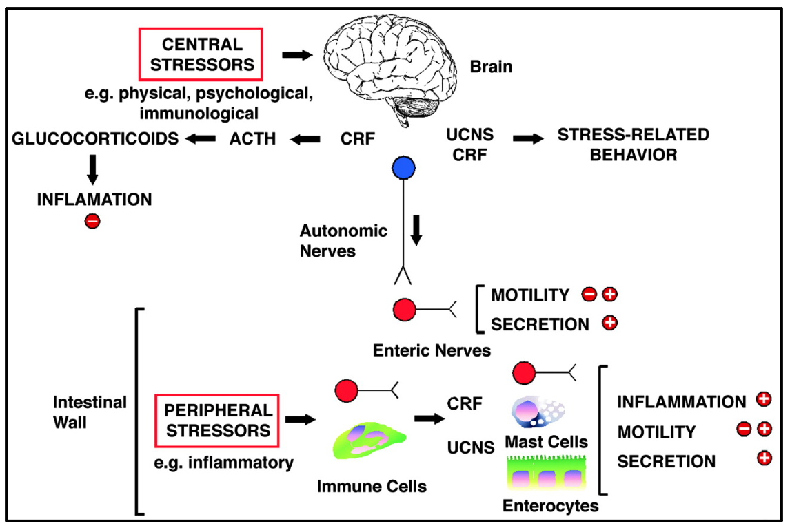 The biochemical consequences of stress.