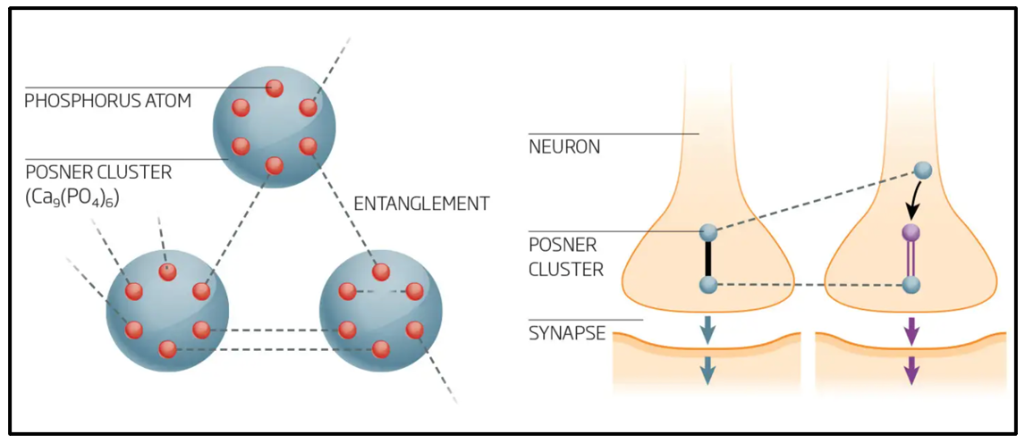 A schematic overview of quantum entangled Posner molecules within and between neurons.
