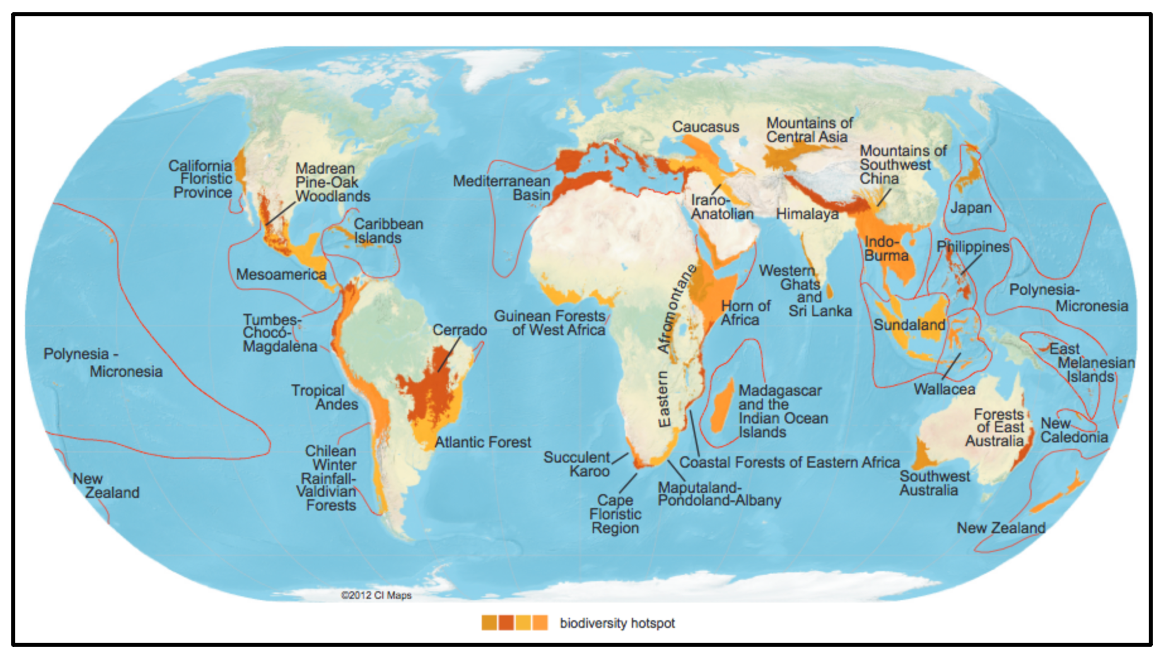 A worldly view on the 36 biodiversity hotspots.