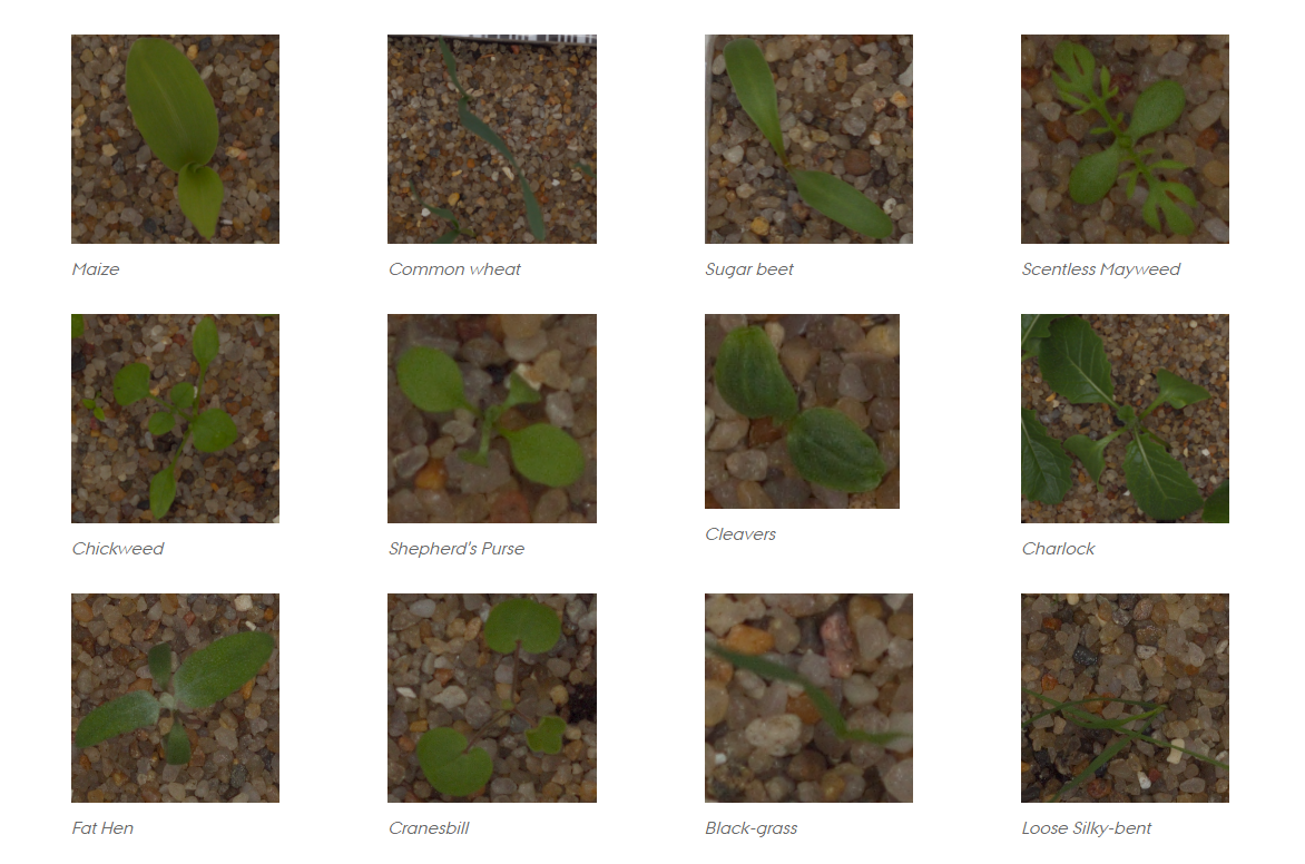 Kaggle #1 Winning Approach for Image Classification Challenge