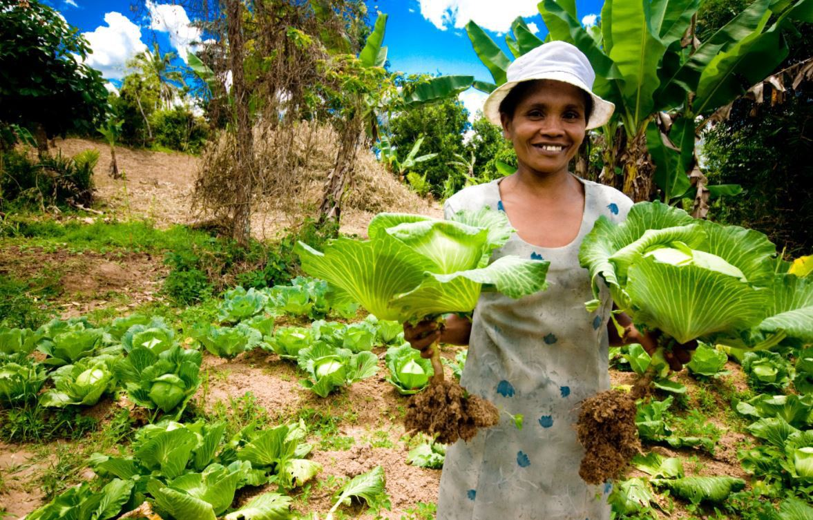 A cabbage farmer from Madagascar shows her successful crop.