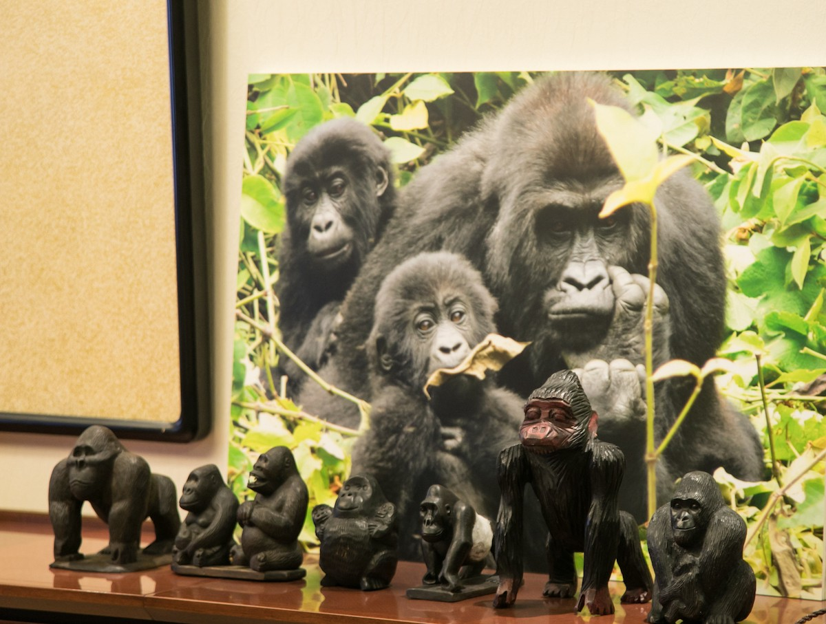 Gorilla figurines atop a desk cabinet