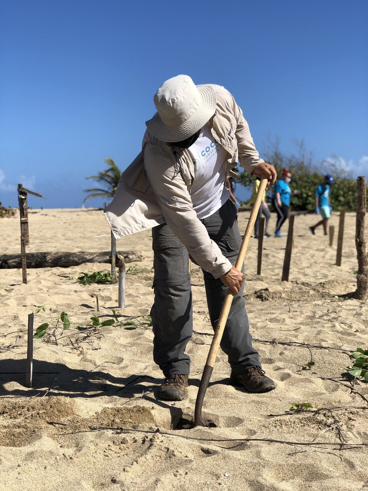 Co-founder of CoCoPR, Hector Varela digs a shovel into the sand, preparing to plant a sea grape sapling.