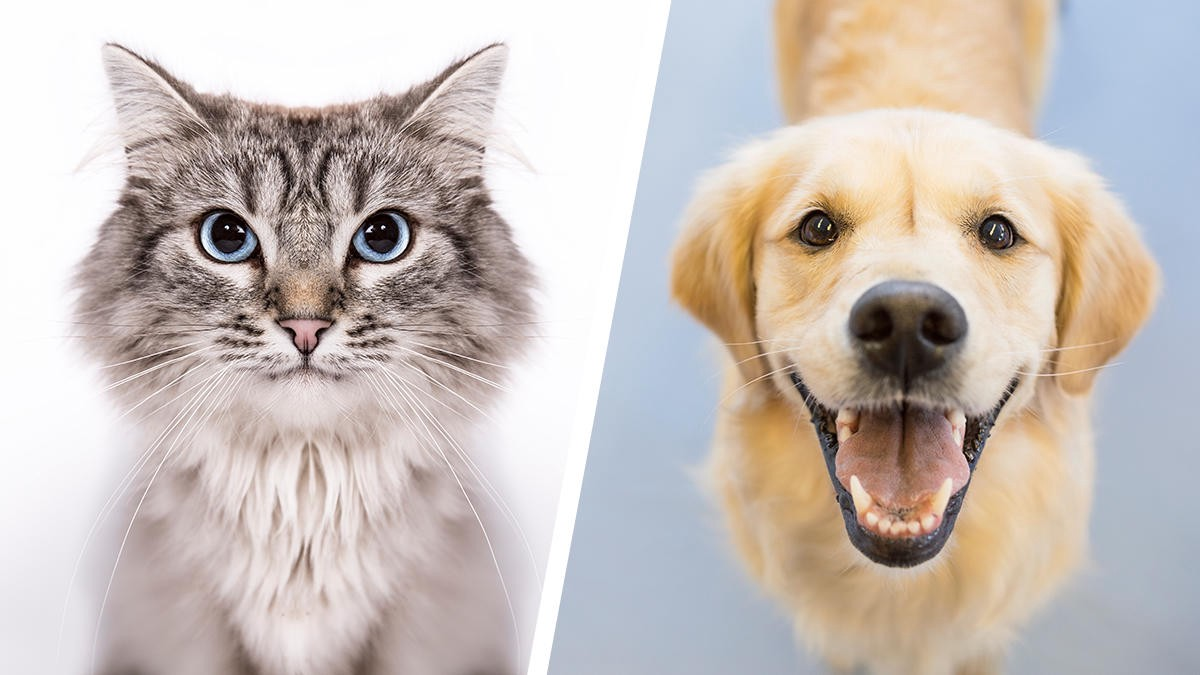 Image Classifier - Cats🐱 vs Dogs🐶 - Towards Data Science