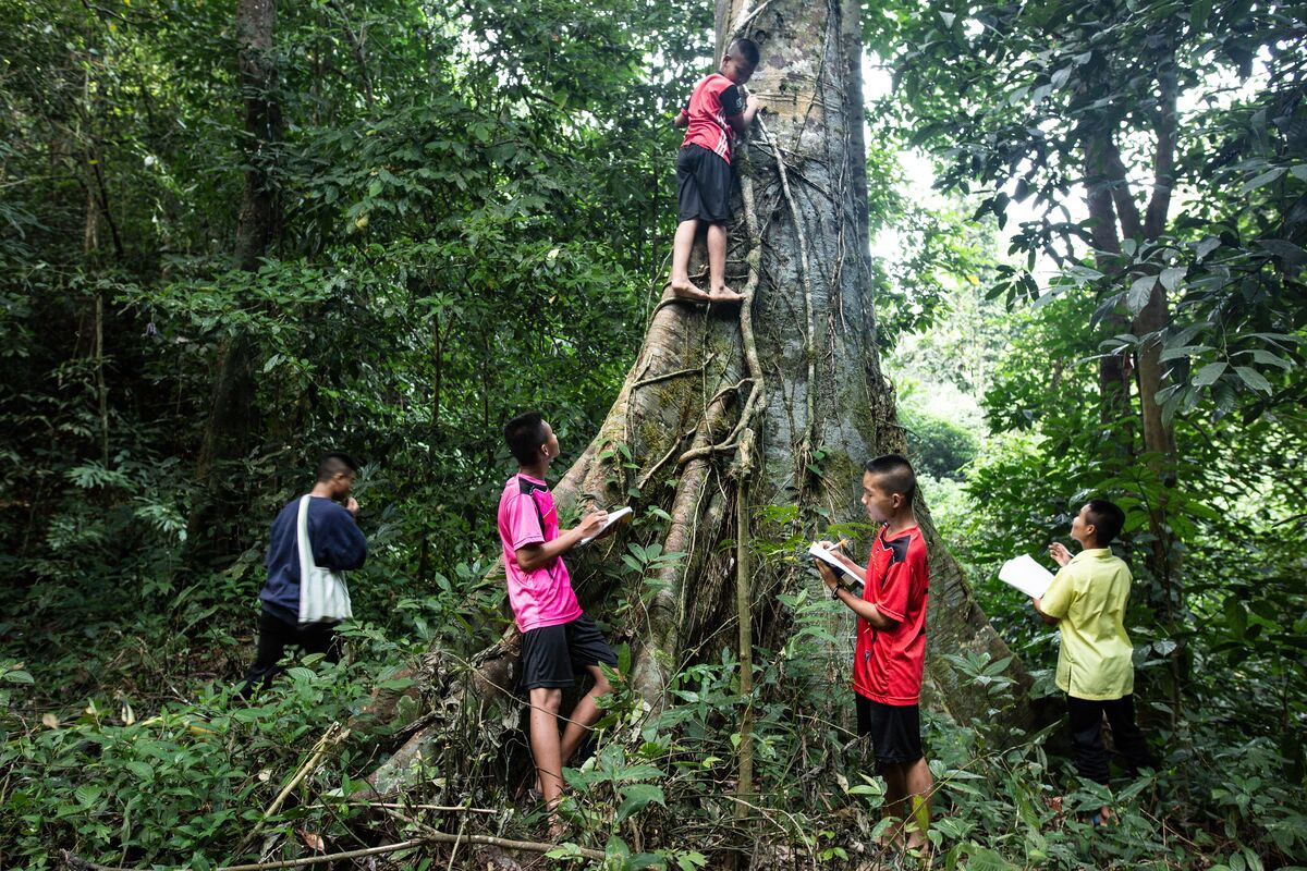 In Thailand, Naphat, wearing a red shirt and holding a book, Pongsak, wearing pink, Wichanon, wearing yellow, Natthapon, wearing blue, and Arthit, wearing red, on the tree, are making record of what they are observing in the forest during their class on maintaining the forests.