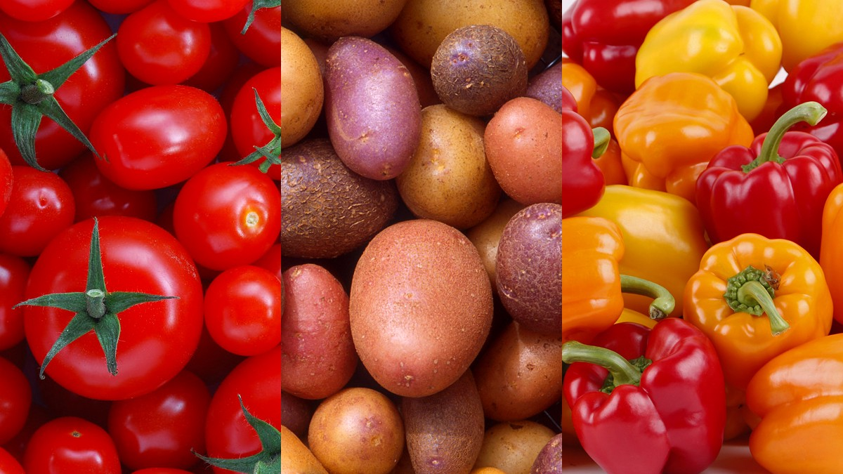 Tomatoes, Potatoes, and Peppers - The Philipendium - Medium
