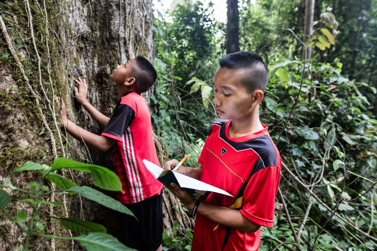 Naphat (front) is recording what he is observing about the tree by writing in a notebook. Arthit (back) is observing the tree in the forest during their practice of maintaining forests.