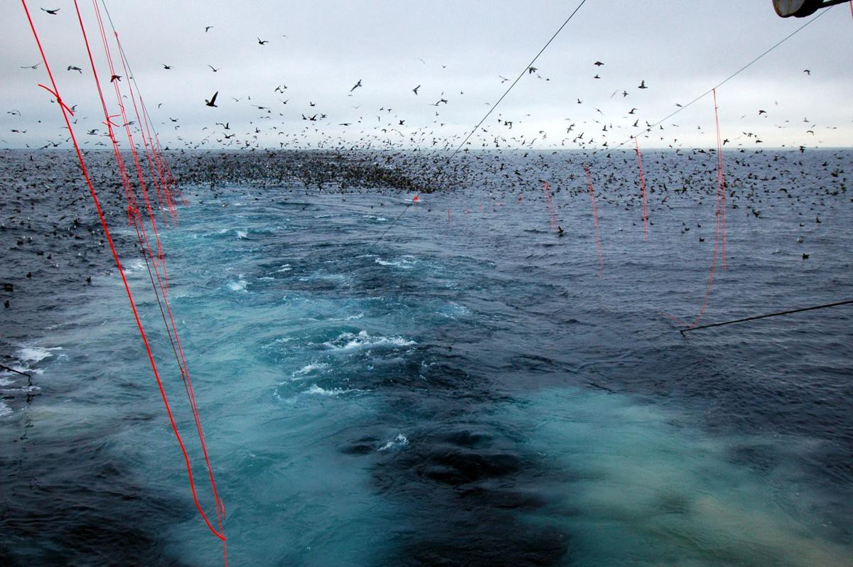 streamliners to reduce bird bycatch while fishing