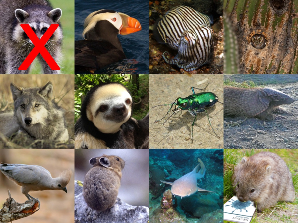 Photos of 11 animal nominees, plus a raccoon whose face is crossed out. Photos are repeated individually below.