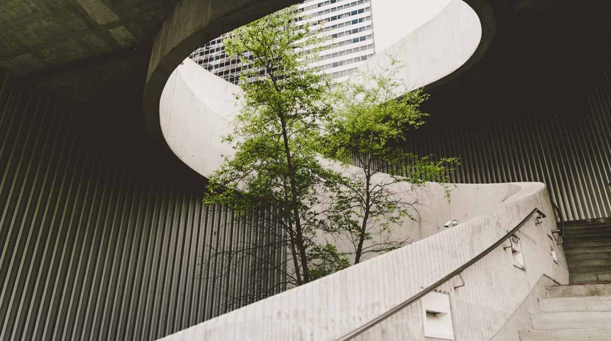 A concrete staircase curving  around a tree reaching to the sky.