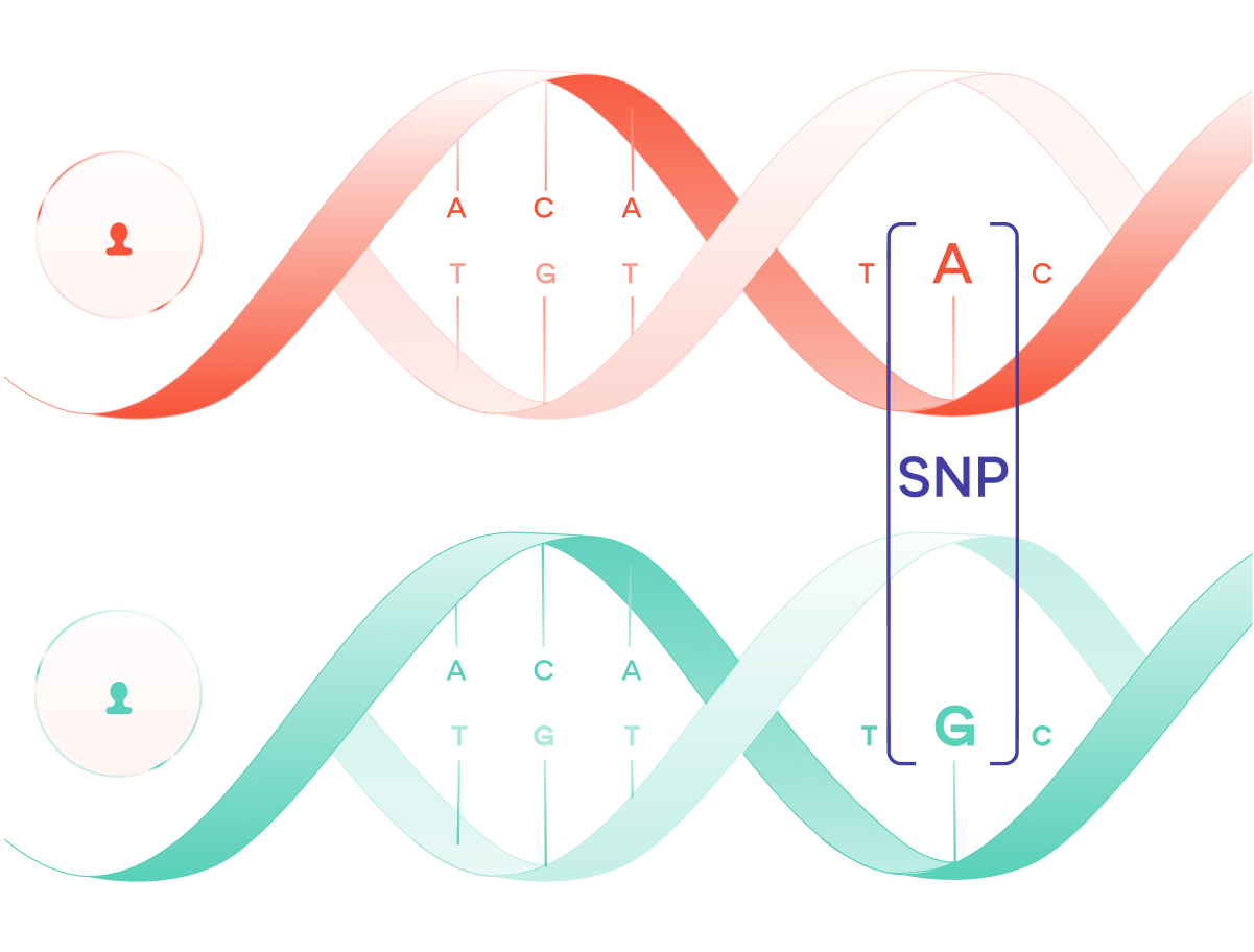 SNP of the week. This week, we look at the genetics of… | by Sano ...