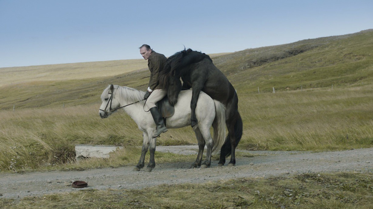 Foreign Oscar Entry Review: Of Horses and Men (Hross í Oss)