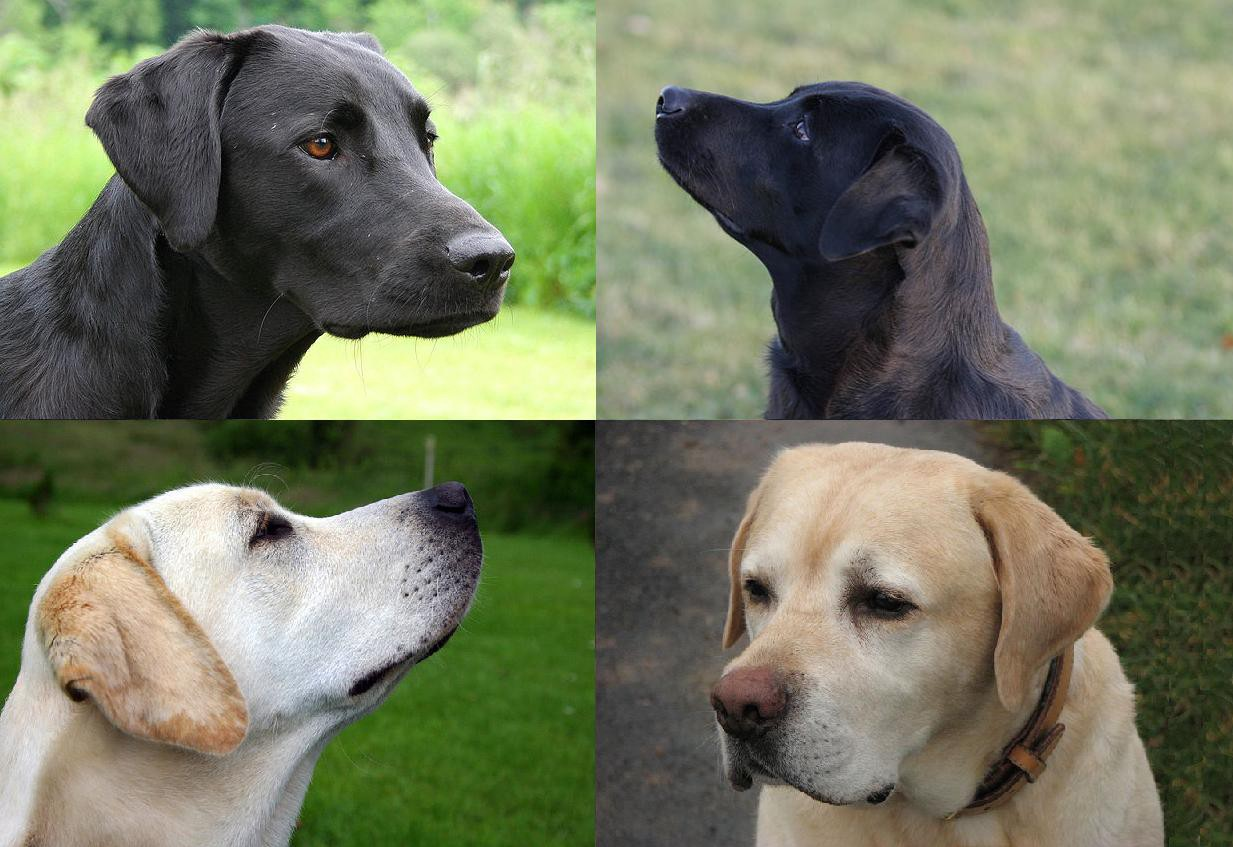 Top 10 Pet Dog Breeds In India Owning A Dog Isn T The Same As Buying By Madhu Medium
