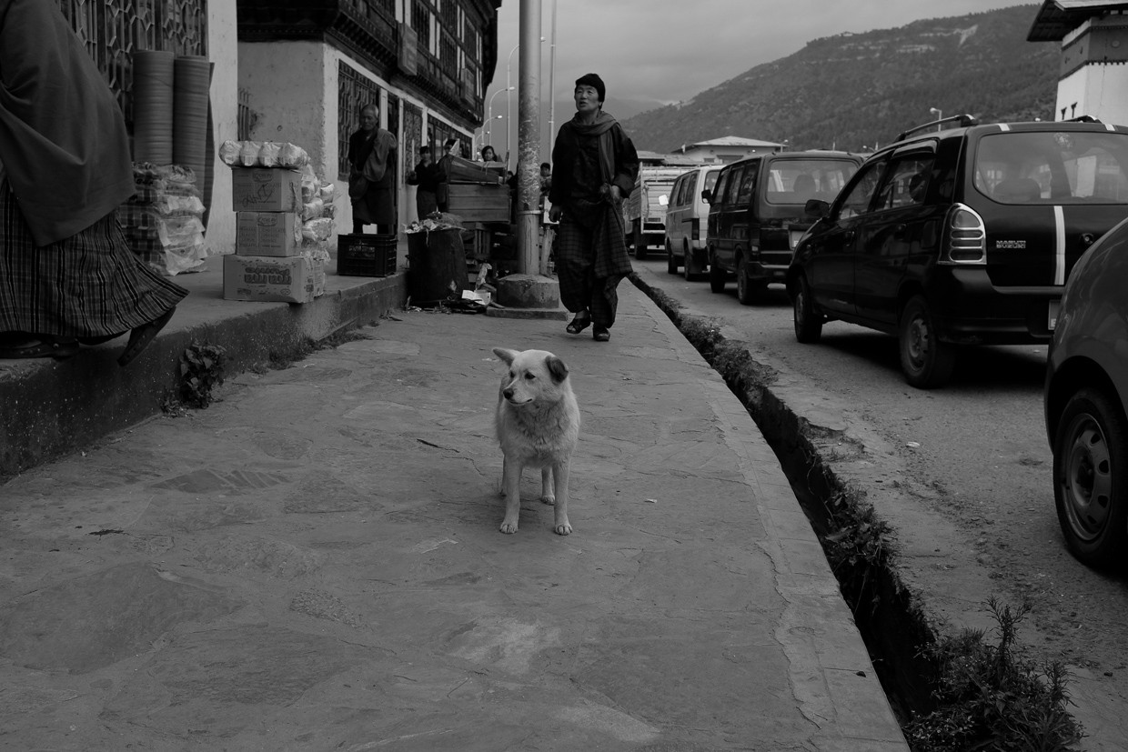 bhutanese street dog in paro bhutan by freelance photographer mark l chaves