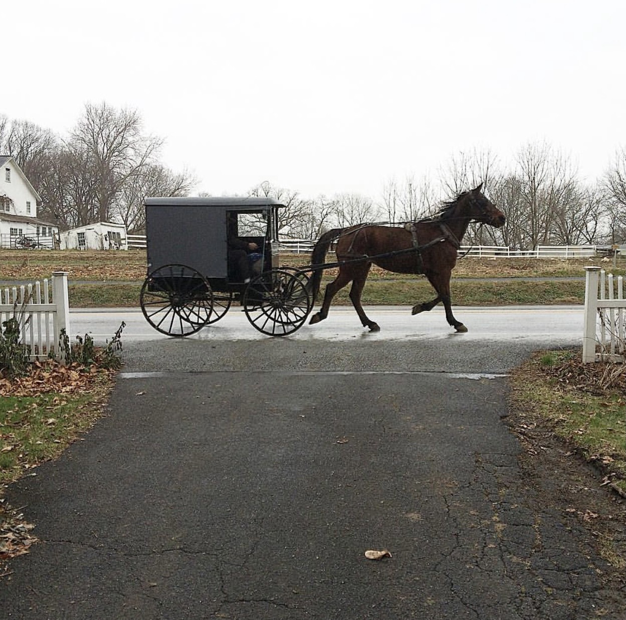 Amish horse & buggy in Lancaster, PA