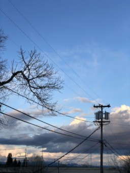 A power line pole stands against a partly cloudy sky. Power lines stretch in every direction from various points on the pole. Coming into the frame from the left, a tree branch seems poised to touch the lines as it grows.