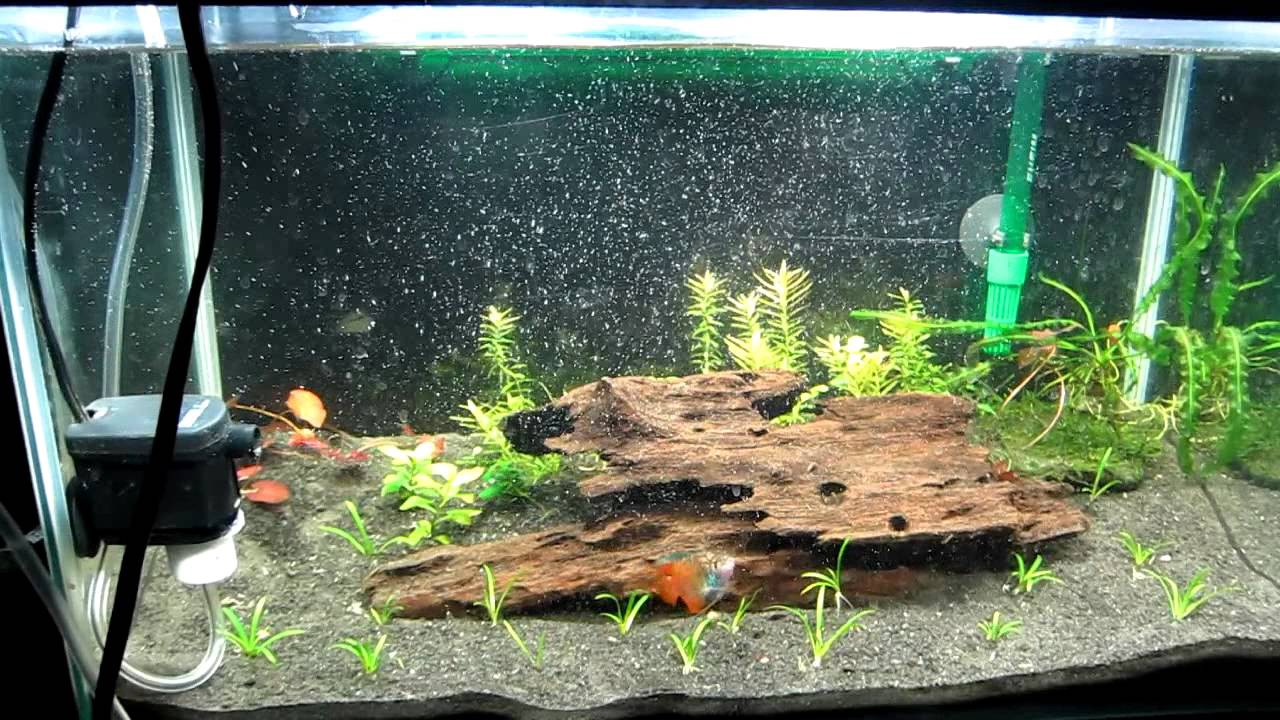 Can I Use Stones And Driftwood In My Planted Aquascape By Planted Tank Source Medium
