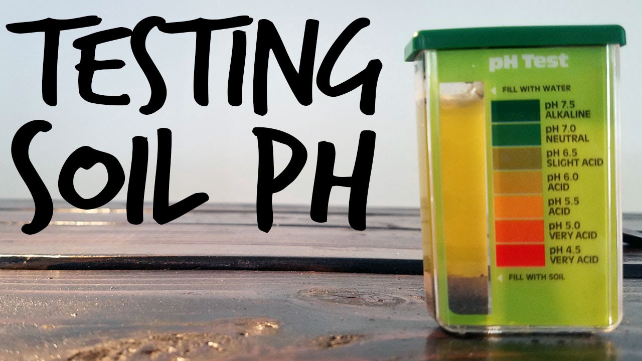 Video: Test PH value in the soil correctly — video tutorial  by