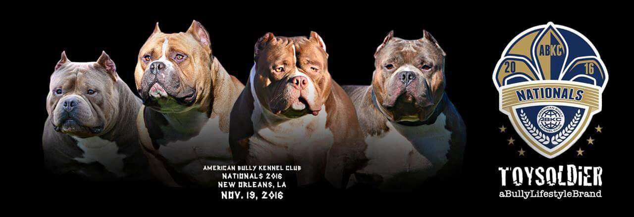 How Much Does An American Bully Cost? - BULLY KING Magazine
