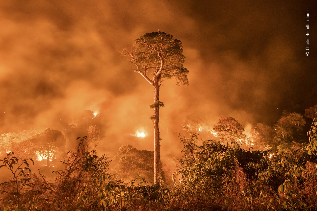 A tall single tree stands tall amidst a background of burning brush and fire
