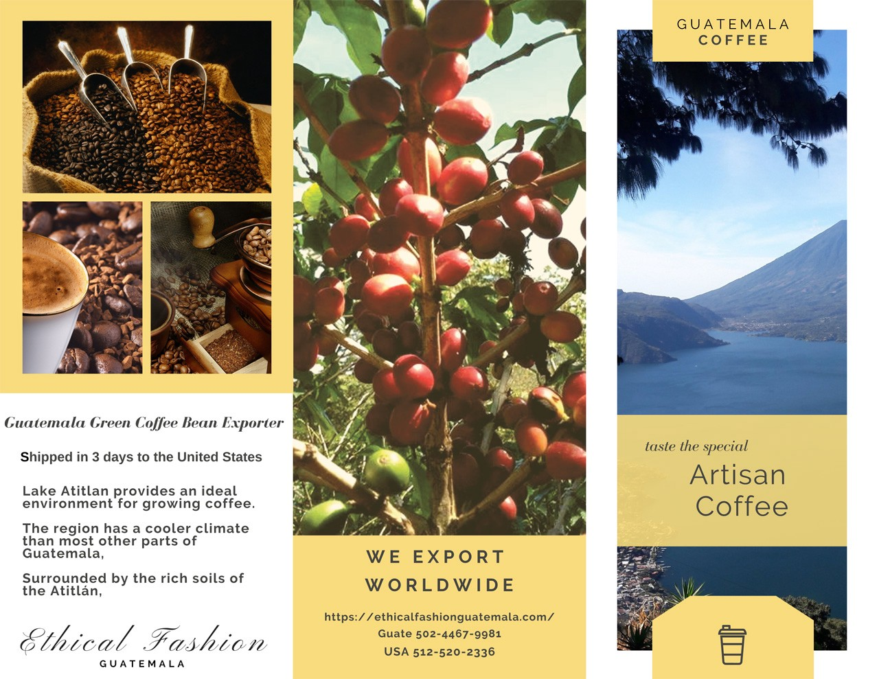 Guatemala Arabica Green Coffee Bean Exporting By Ethical Fashion