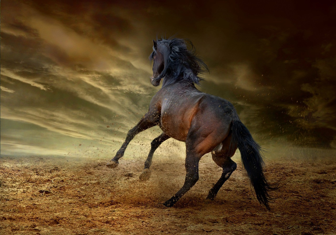 Stonewalling ~ One of the Four Horsemen of the Apocalypse in