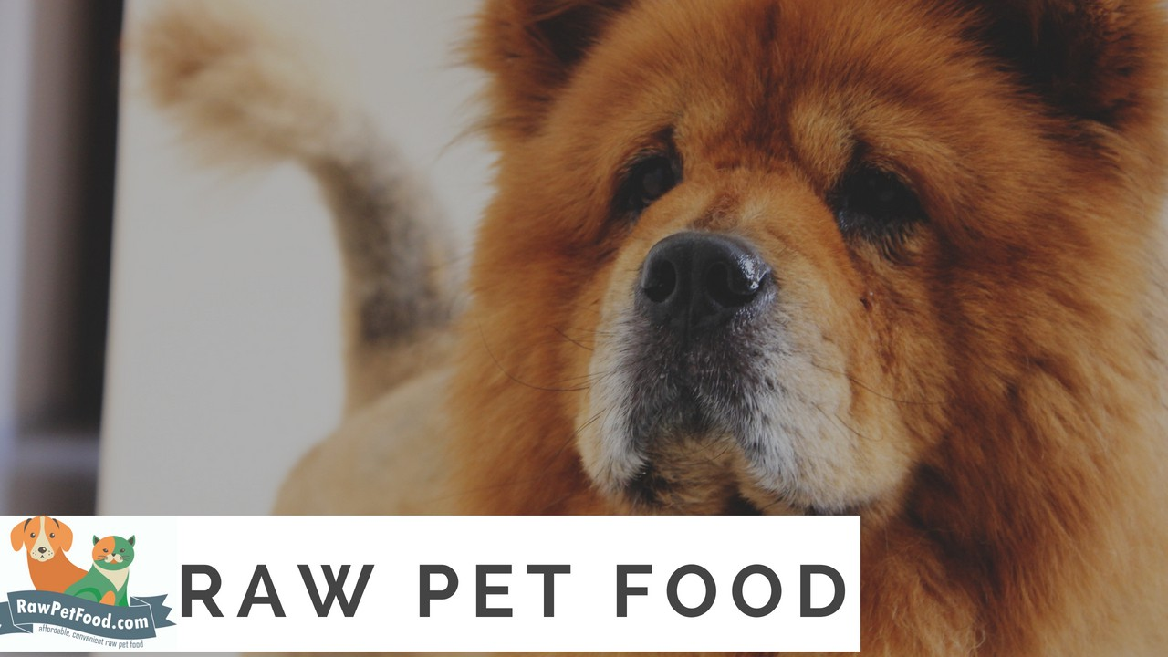 3 Reasons To Be Wary Of Dog Kibble Raw Pet Food Medium