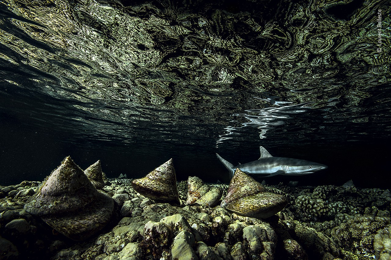 An underwater photo of a shark swimming in a dark green and black reef full of pyramid like shell structures