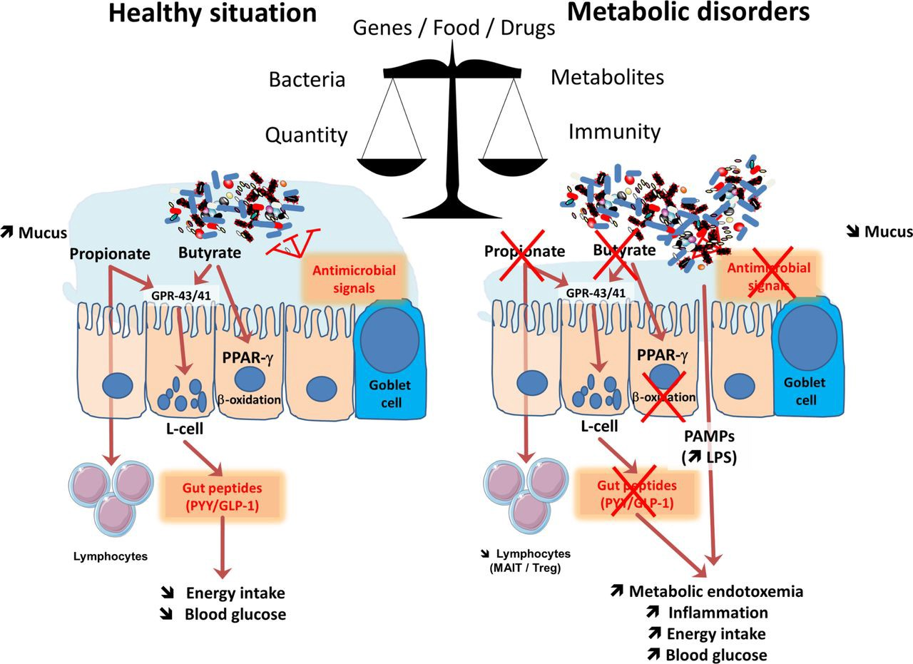 Microbiome and immunity
