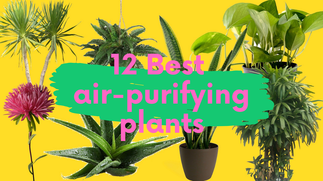 12 Nasa Recommended Air Purifying Plants That You Must Have In