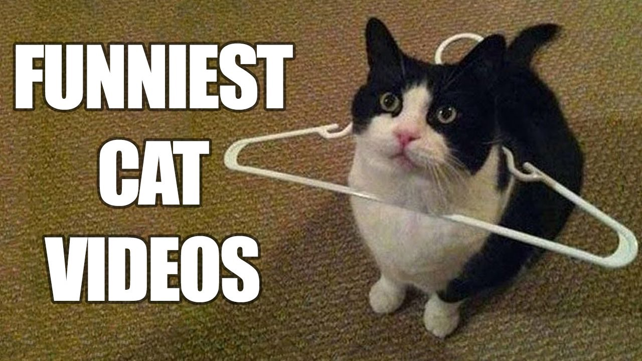 Cat wearing a clothing hanger with text 'Funniest Cat Videos'