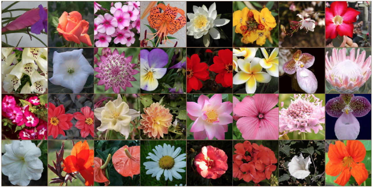 PyTorch Scholarship Challenge from Facebook — Flower Classifier